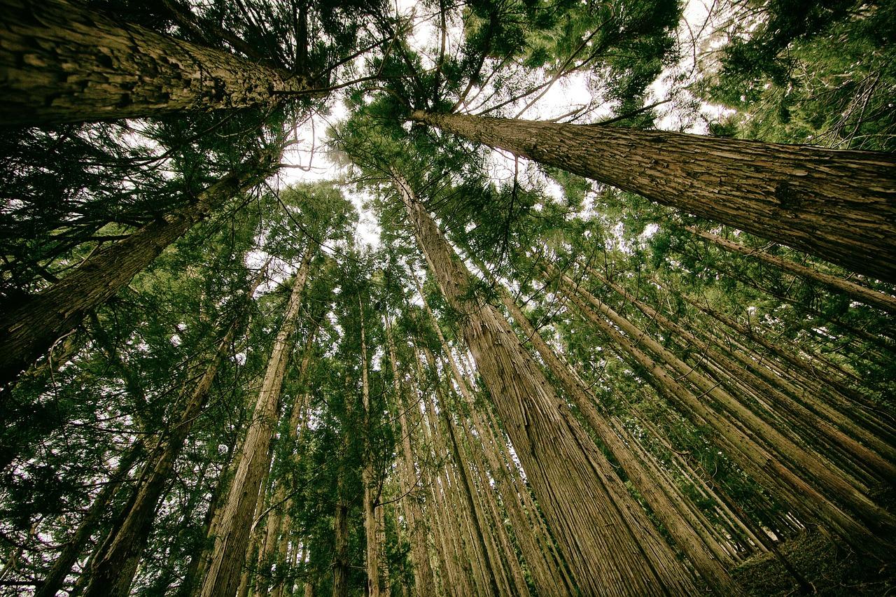 L'homme qui plantait des arbres, Giono