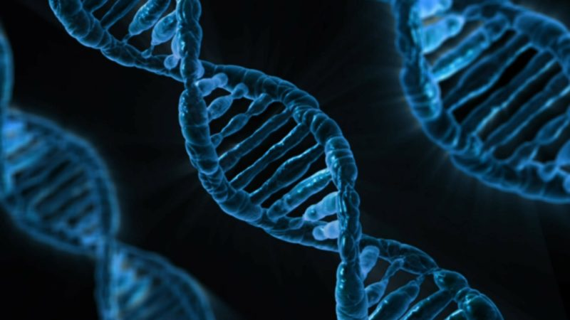 Les chromosomes au cours du cycle cellulaire