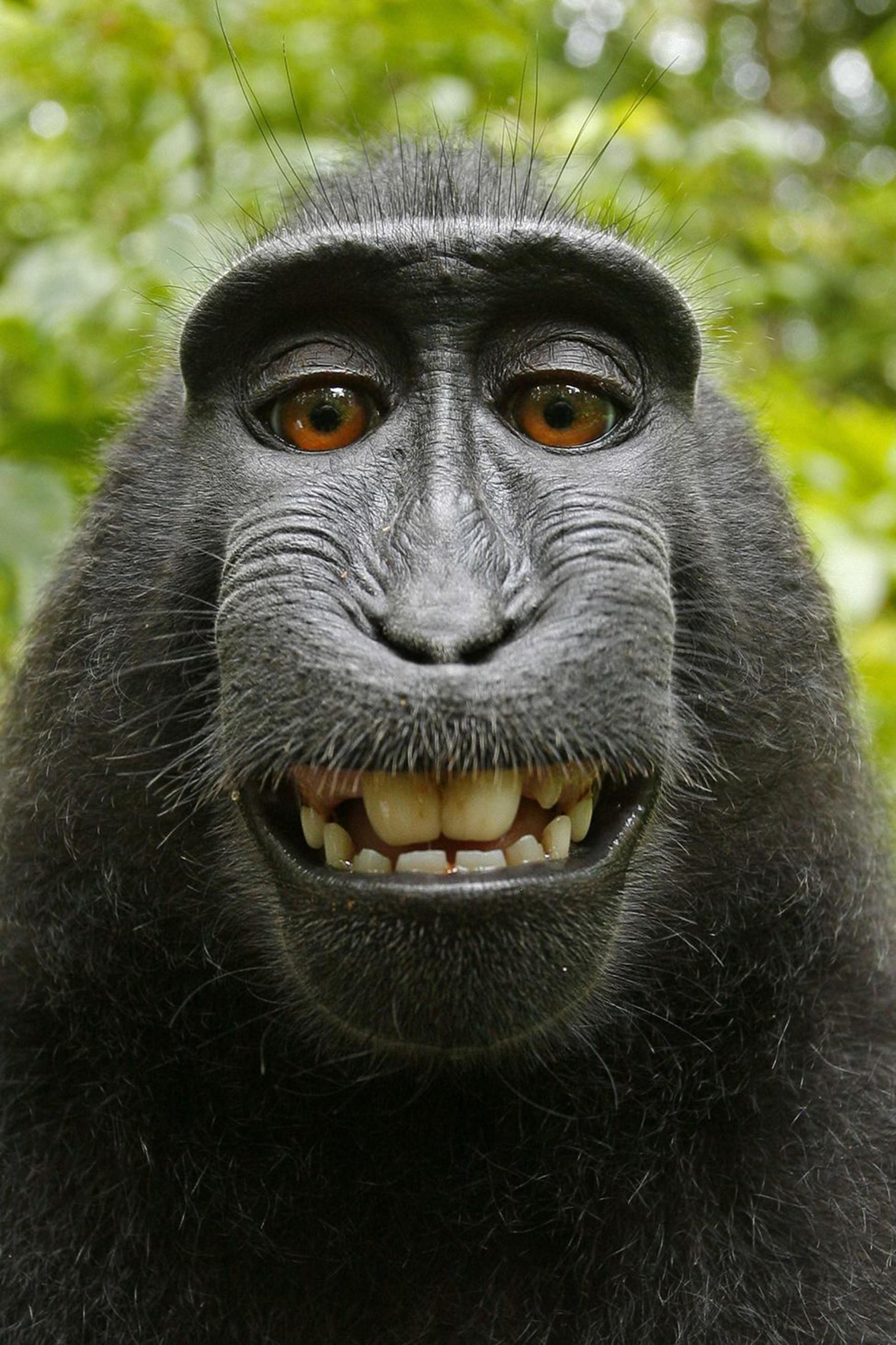 Evolution de la vision chez les primates