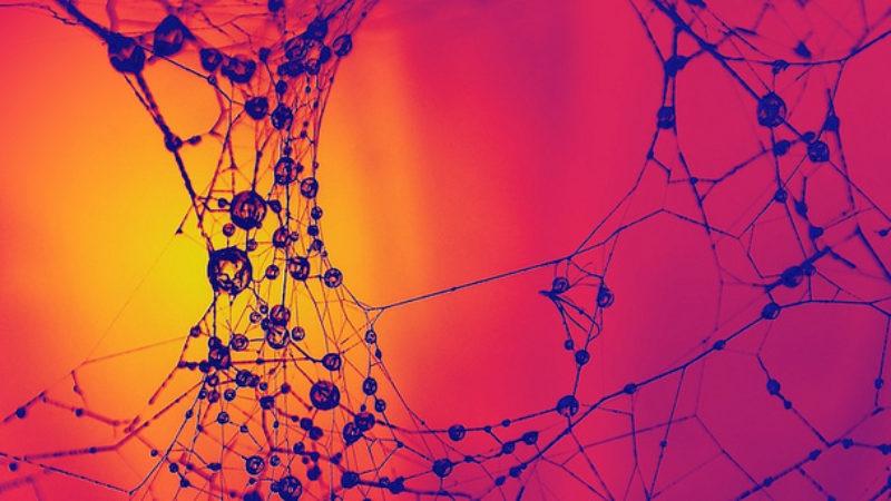 Fonctionnement synapse