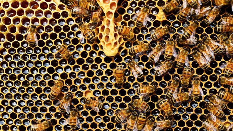 Hécatombes dans les ruches