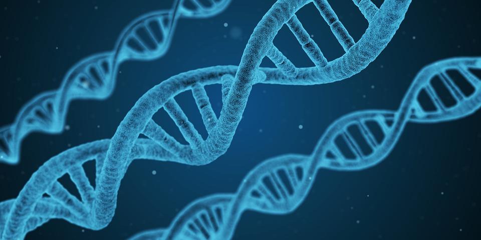 Découverte du support de l'information génétique.